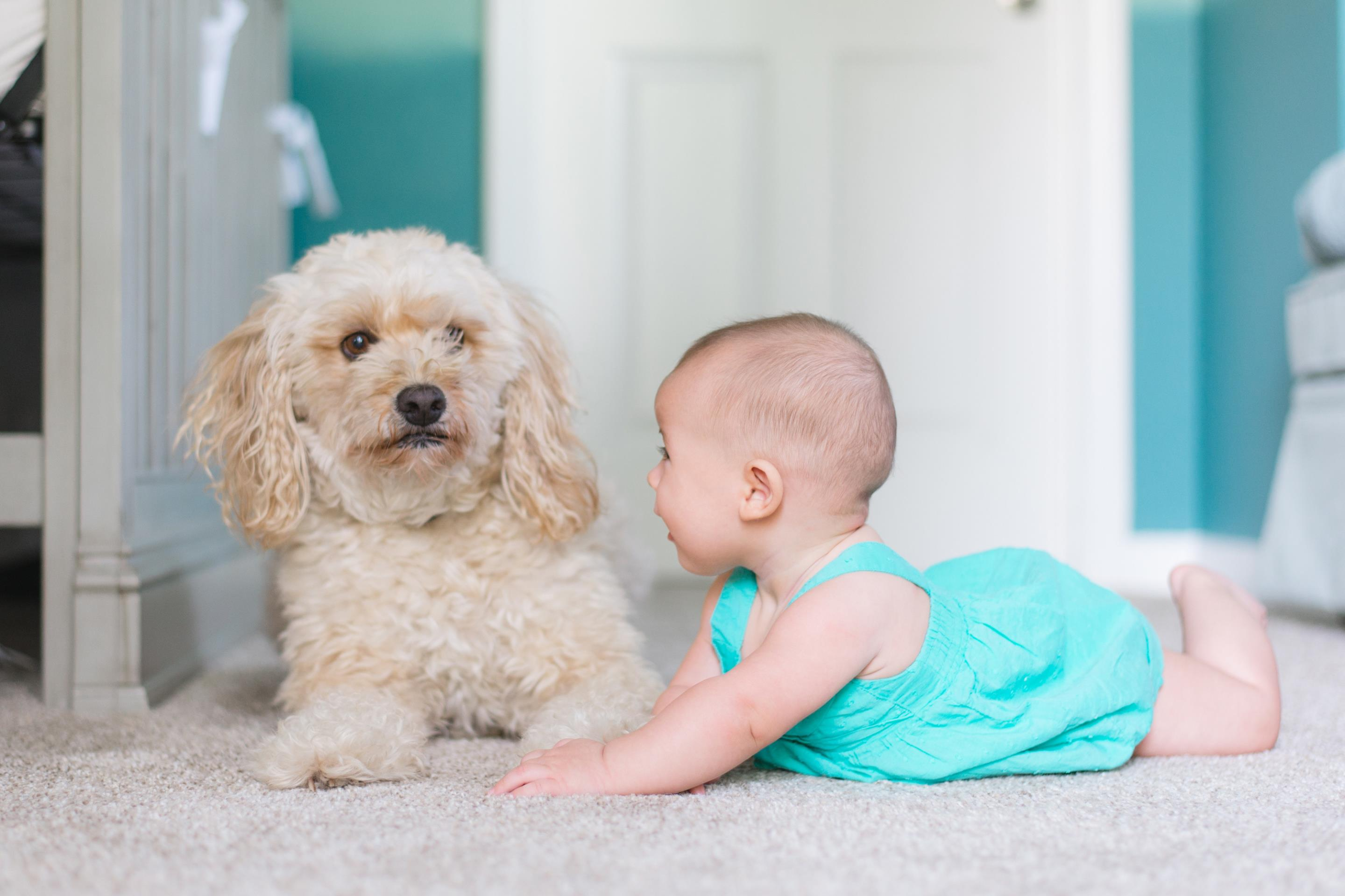 Autism & Pets: The Benefits and Options